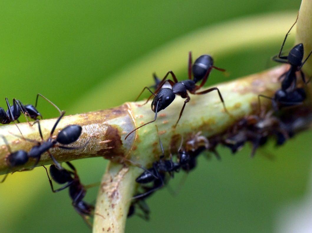 formiche in camper